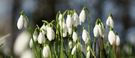 Der Frühling kommt … bestimmt!