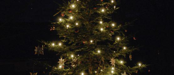 Der Weihnachtsbaum für Alle steht!